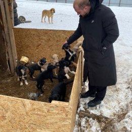 """Воспитанники """"СШ самбо и дзюдо"""" посетили приют для животных"""