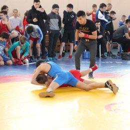 Свыше 150 борцов приняли участие в чемпионате и первенстве области